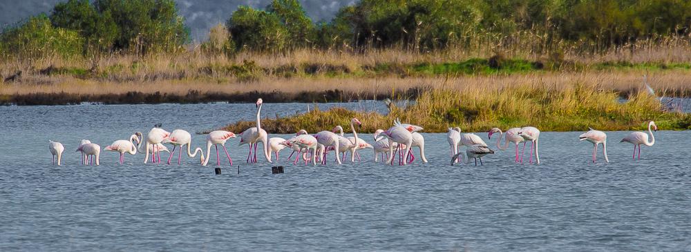 Flamingos auf Korfu